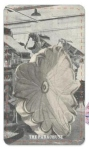 Tarot Series (The Parachute)